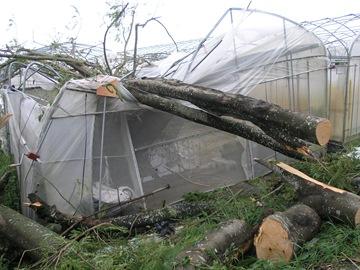 產銷班農場的溫室遭路樹壓毀